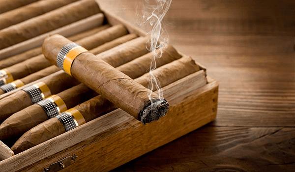Xì gà chứa hàm lượng nicotin nhiều gấp 10 lần thuốc lá thông thường.